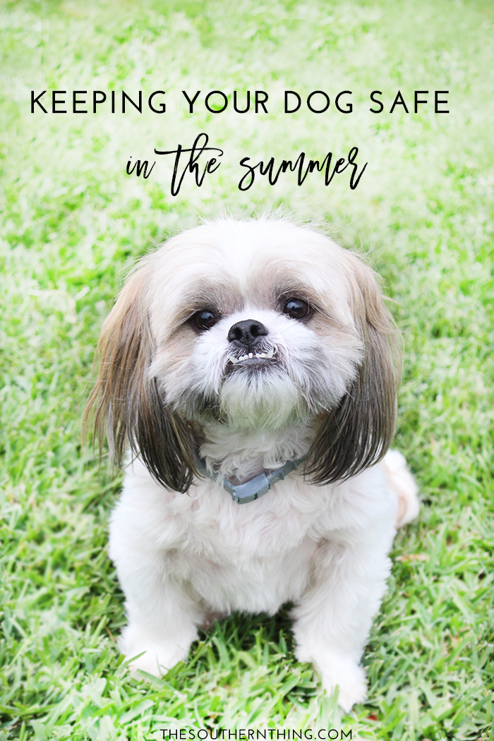Tips for Keeping Your Dog Safe in the Summer