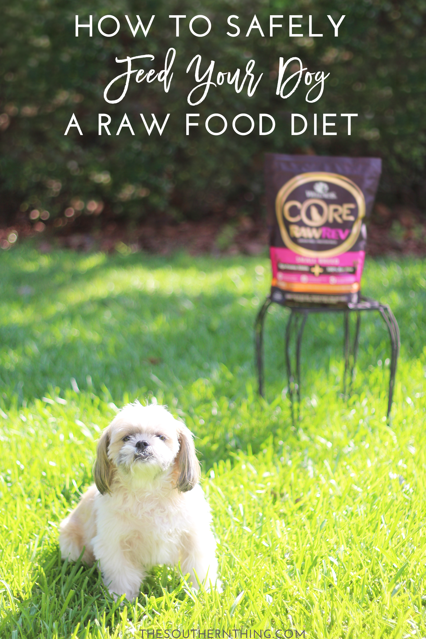 Raw Dog Food Diet How To Safely Feed Your Dog A Raw Diet
