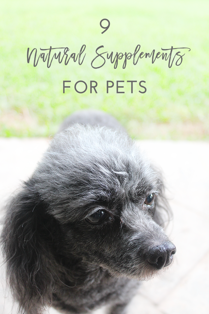 Natural Supplements for Pets | Now Pets Supplements for Dogs & Cats Review