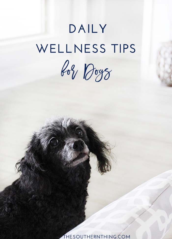 Daily Wellness Tips for Dogs